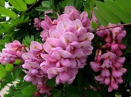 Рассада, саженцы, кустарники, деревья - робиния розовая и др. саженцы, 0