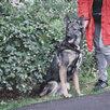 Небольшая собачка ищет дом  по цене даром - Собаки, фото 13