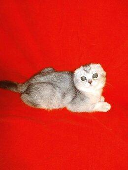 Кошки - Шотландские кошки, 0