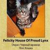 Котята Мейн-Кун по цене 25000₽ - Кошки, фото 2