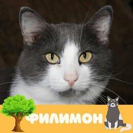 Кошки - Кот Филимон, 0