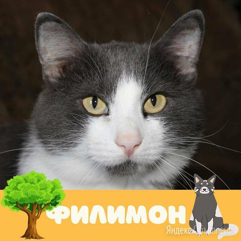 Кот Филимон по цене даром - Кошки, фото 0
