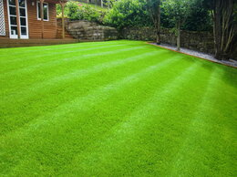 Газоны - Посев газона. Укладка рулонного газона., 0