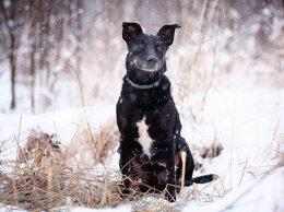 Собаки - Преданный Костя, 0