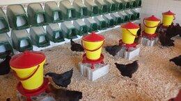 Товары для сельскохозяйственных животных - Гнезда с насестом для кур несушек, 0