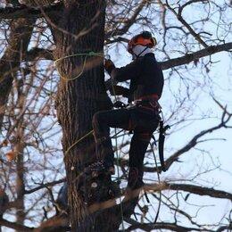 Бытовые услуги - Спил деревьев любой сложности , 0