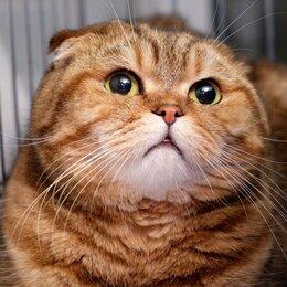 Кошки - Мягкая и ОЧЕНЬ ласковая Фелиса подпрыгивает, чтобы её погладили, 0