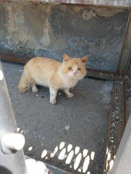 Животные - НАЙДЕН рыжий котик (возможно кошка) , 0
