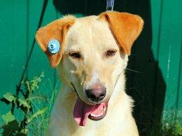 Собаки - Скуби-Ду собака из приюта в добрые руки, 0