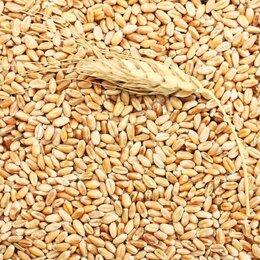 Товары для сельскохозяйственных животных - Пшеница, ячмень фуражная, 0