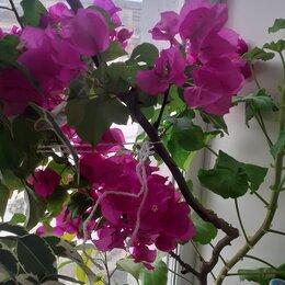 Продукты - комнатные цветы, 0