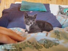 Кошки - Котёнок в дар, 0
