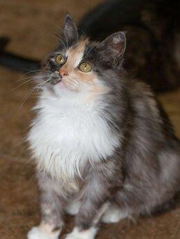 Кошки - Обворожительная ласковая Лейла в самые добрые руки, 0