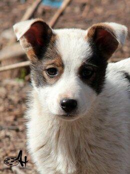 Собаки - Ищут дом и любящих хозяев!, 0
