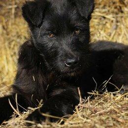 Собаки - Щенок-бородатик, 0