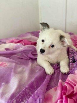 Собаки - Бим 2, 5 месяца в дар, 0