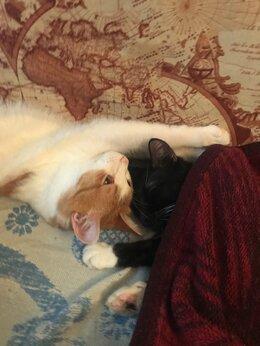 Кошки - Кот и кошка, 0