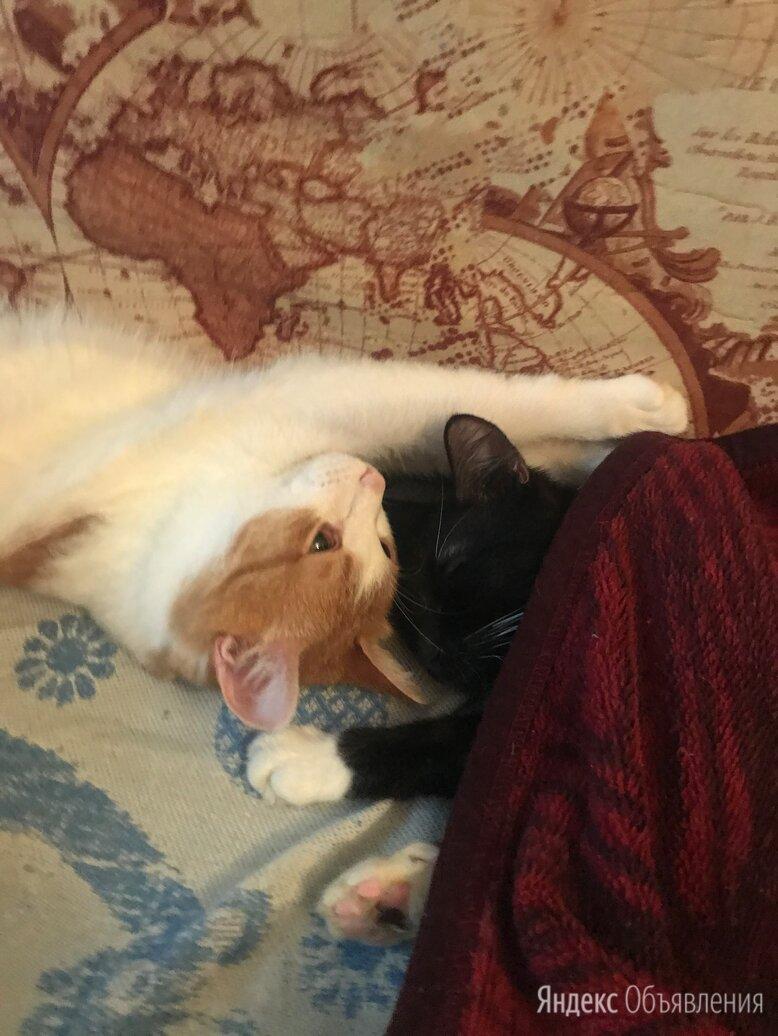 Кот и кошка по цене даром - Кошки, фото 0