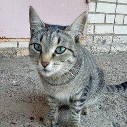 Кошки - Красавицу оставили на улице при переезде! , 0