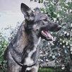 Небольшая собачка ищет дом  по цене даром - Собаки, фото 2