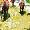Конные прогулки в Сочи по цене 2500₽ - Экскурсии и туристические услуги, фото 7