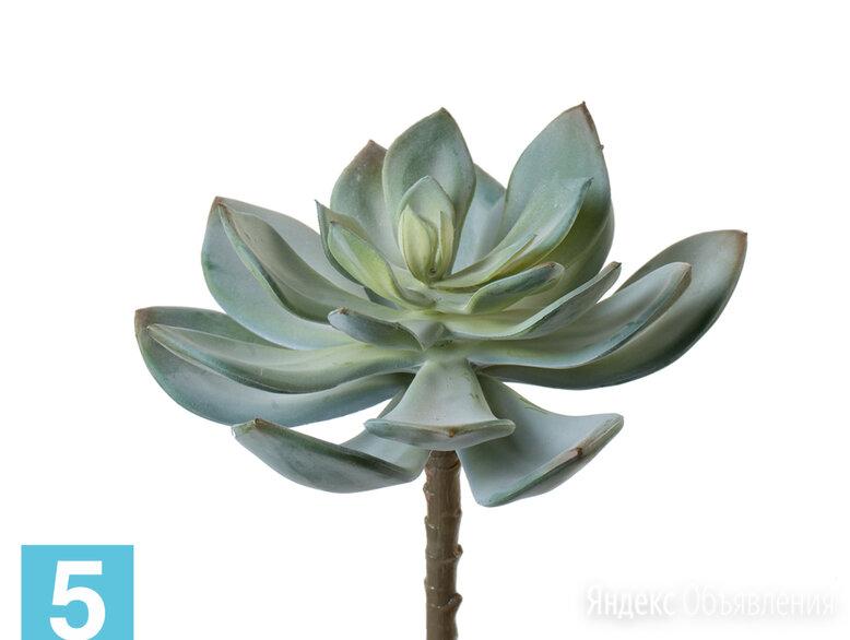 Суккулент Эхеверия Гиббифлора светло-зеленая припыленная по цене 690₽ - Искусственные растения, фото 0