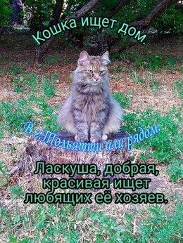 Кошки - Симпатичная кошечка ищет себе ДОМ!, 0