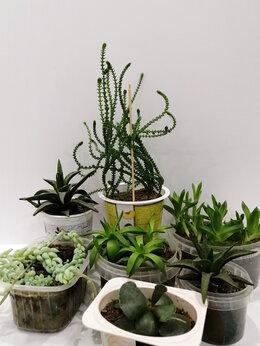 Комнатные растения - Суккуленты для флорариума, 0