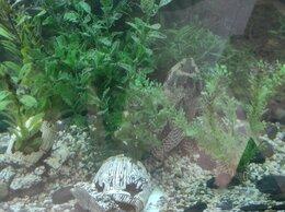 Аквариумы, террариумы, тумбы - Аквариум, рыбы, техническое оснащение, 0