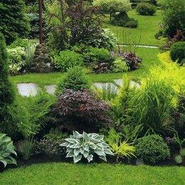 Рассада, саженцы, кустарники, деревья - Ландшафтный дизайн. Озеленение., 0