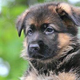 Услуги для животных - Дрессировка собак опытным кинологом. Щелково-Болшево-Монино, 0