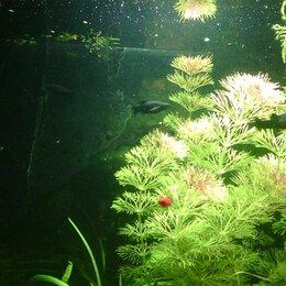 Растения для аквариумов и террариумов - Растения , Рыбки,декор, 0