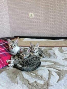 Кошки - Котят , 0