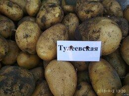 Лук-севок, семенной картофель, чеснок - Продам картофель сорта Тулеевский , 0
