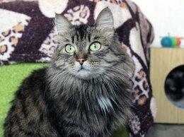 Кошки - Кошка Шакира, 0