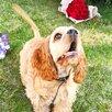 Радостный щенок 🐶 по цене 30000₽ - Собаки, фото 2