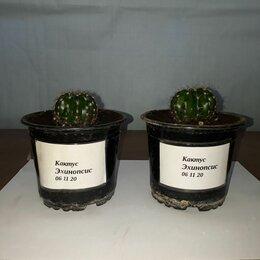 Комнатные растения - Кактус, 0