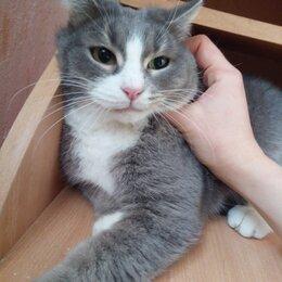 Кошки - Красивая кошечка ищет опытную и ответственную семью! , 0