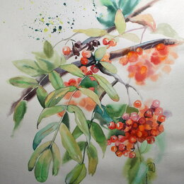 Картины, постеры, гобелены, панно - Рябина. Акварель. Осень,ягода,красный,картина, 0