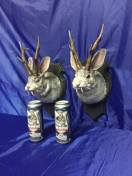 Рога, шкуры, чучела животных - Чучело кролика с рогами(Вольпертингер), 0