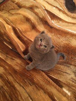 Кошки - Плюшевая радость в дом, 0