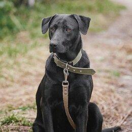 Собаки - Дружелюбный метис лабрадора 4 года, 0