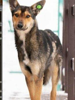 Собаки - Изящная малышка Сан в поиске любящей семьи, 0