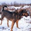 Мишутка ищет дом  по цене даром - Собаки, фото 5