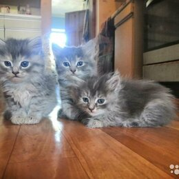 Кошки - Котята в добрые руки даром, 0