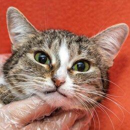 Кошки - Нежная кошка Анечка в добрые руки, 0