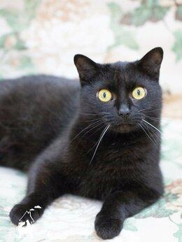 Кошки - Ласковая красавица Таки ждёт любящую семью , 0