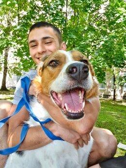 Собаки - Самый лучший друг живет без семьи , 0