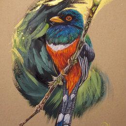 Картины, постеры, гобелены, панно - Ошейниковый трогон. Сухая пастель. Птица,картина, 0