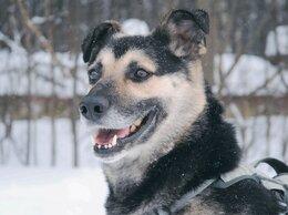 Собаки - Самый лучший и добрый пёсик ищет дом , 0